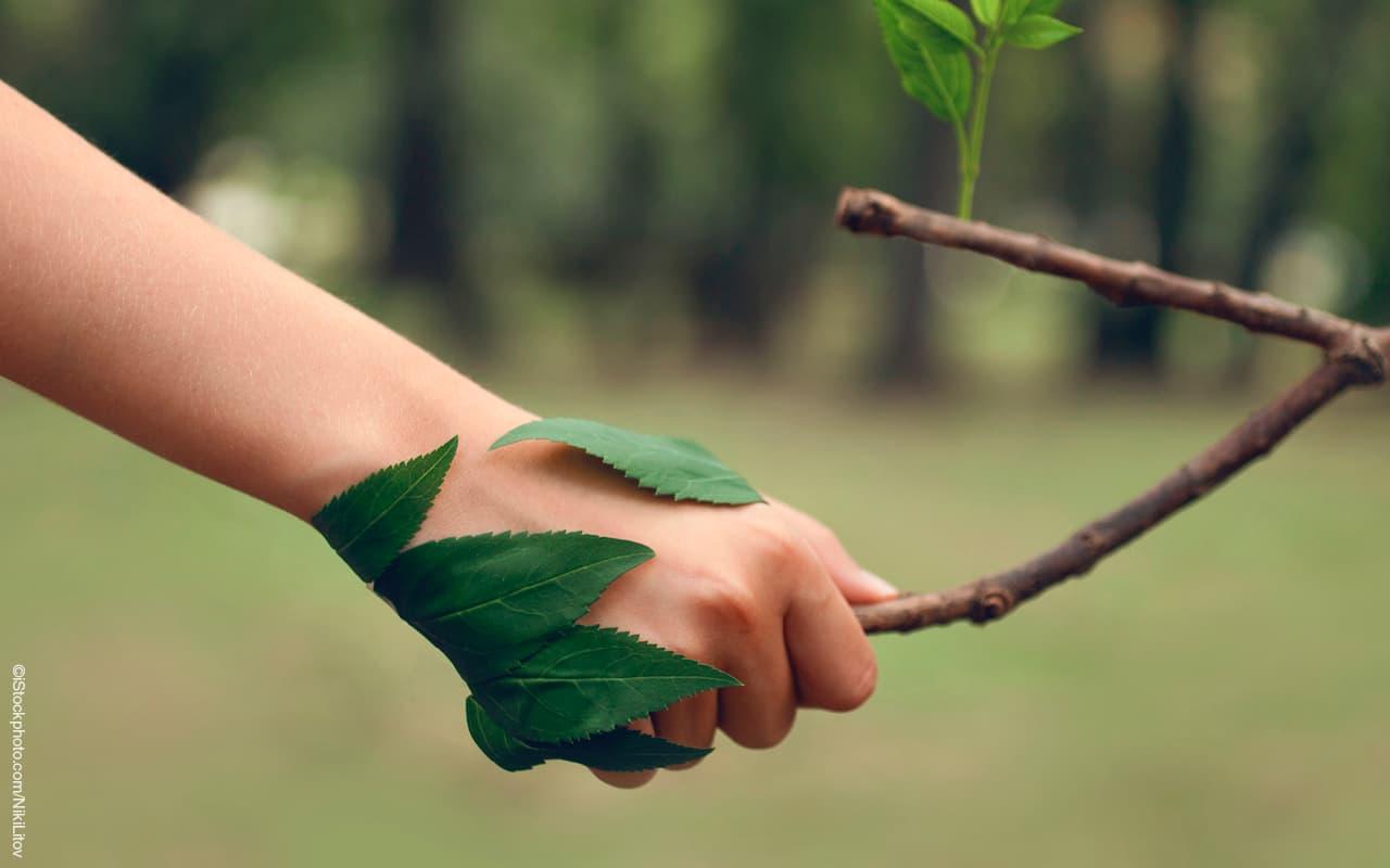 Fachverband der Holzindustrie